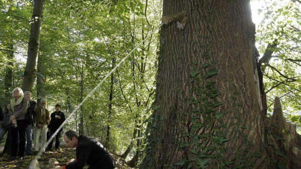 Jacobiweiher Pinkelbaum