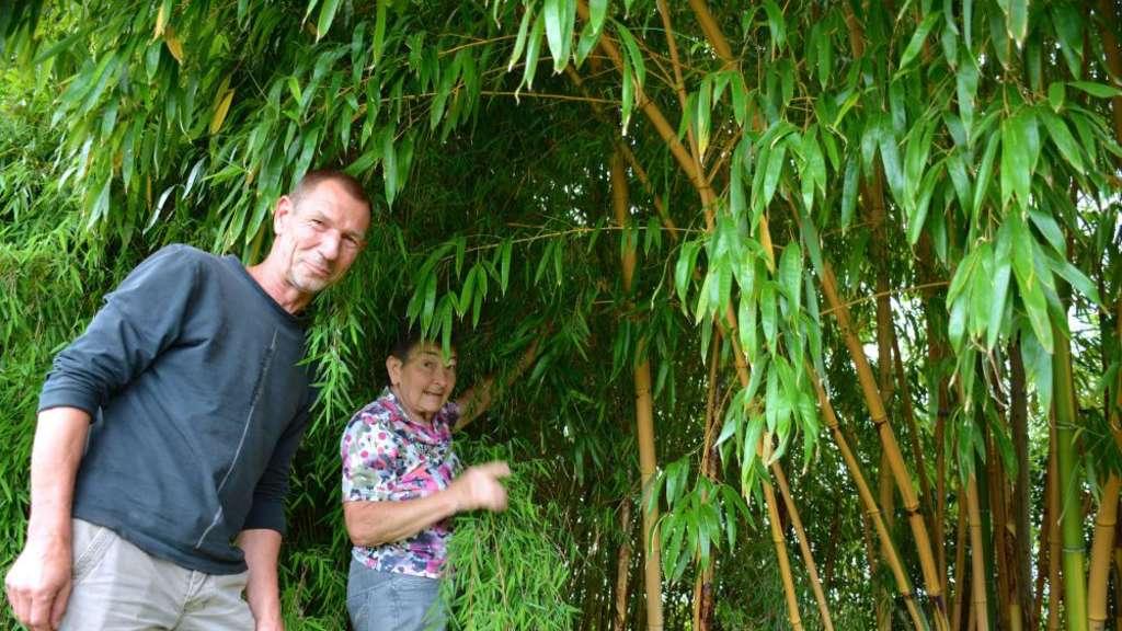 Bambus Paradies Im Garten Rüsselsheim