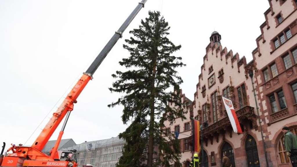 Weihnachtsbaum Frankfurt.Frankfurter Weihnachtsbaum Kommt Weitestgehend Heil An Hessen