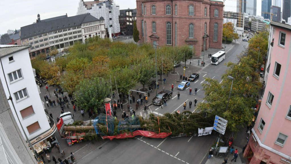 Der Frankfurter Weihnachtsbaum ist da | Frankfurt