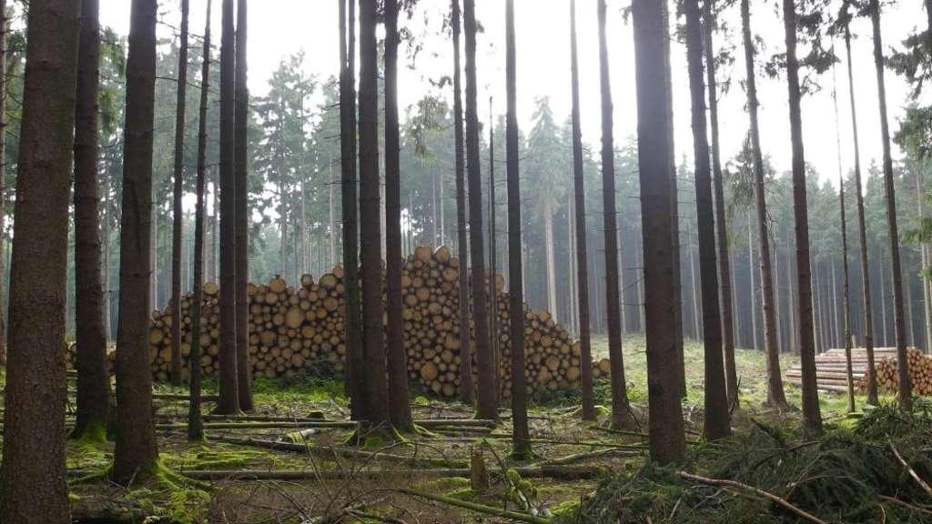 Was Wird Aus Dem Holzverkauf Usingen