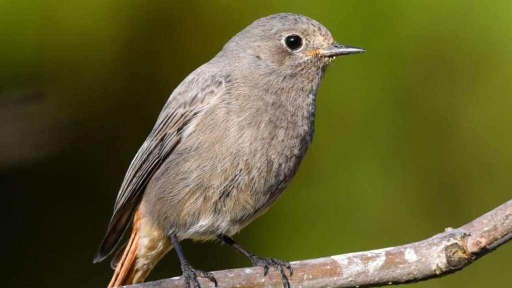 Wassertränke Für Vögel Im Garten Täglich Reinigen Tiere
