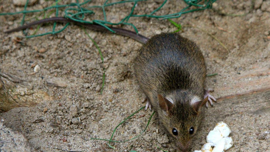 Diese Männer Verhindern Dass Ratten Durchs Klo Kommen Region