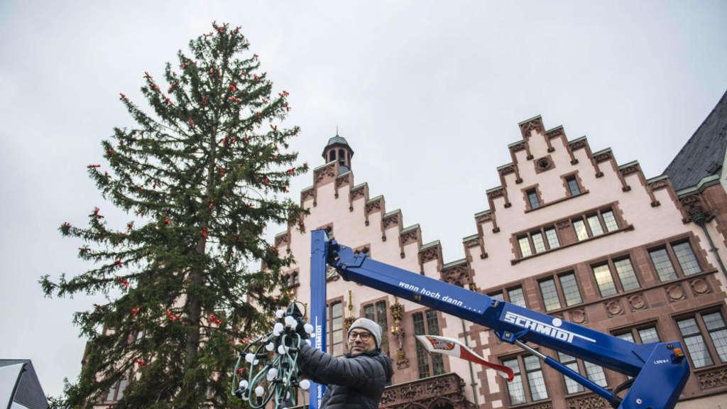 Weihnachtsbaum Frankfurt.Traditioneller Weihnachtsbaum Eine Fichte Für Frankfurt Hessen