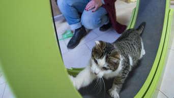 Frankfurt Hessen Frankfurter Katzenschutzverein Soll Heimatlosen Tieren Helfen Frankfurt