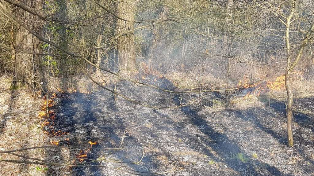 Feuer in Strother Wald: Mehrere hundert Quadratmeter in Brand