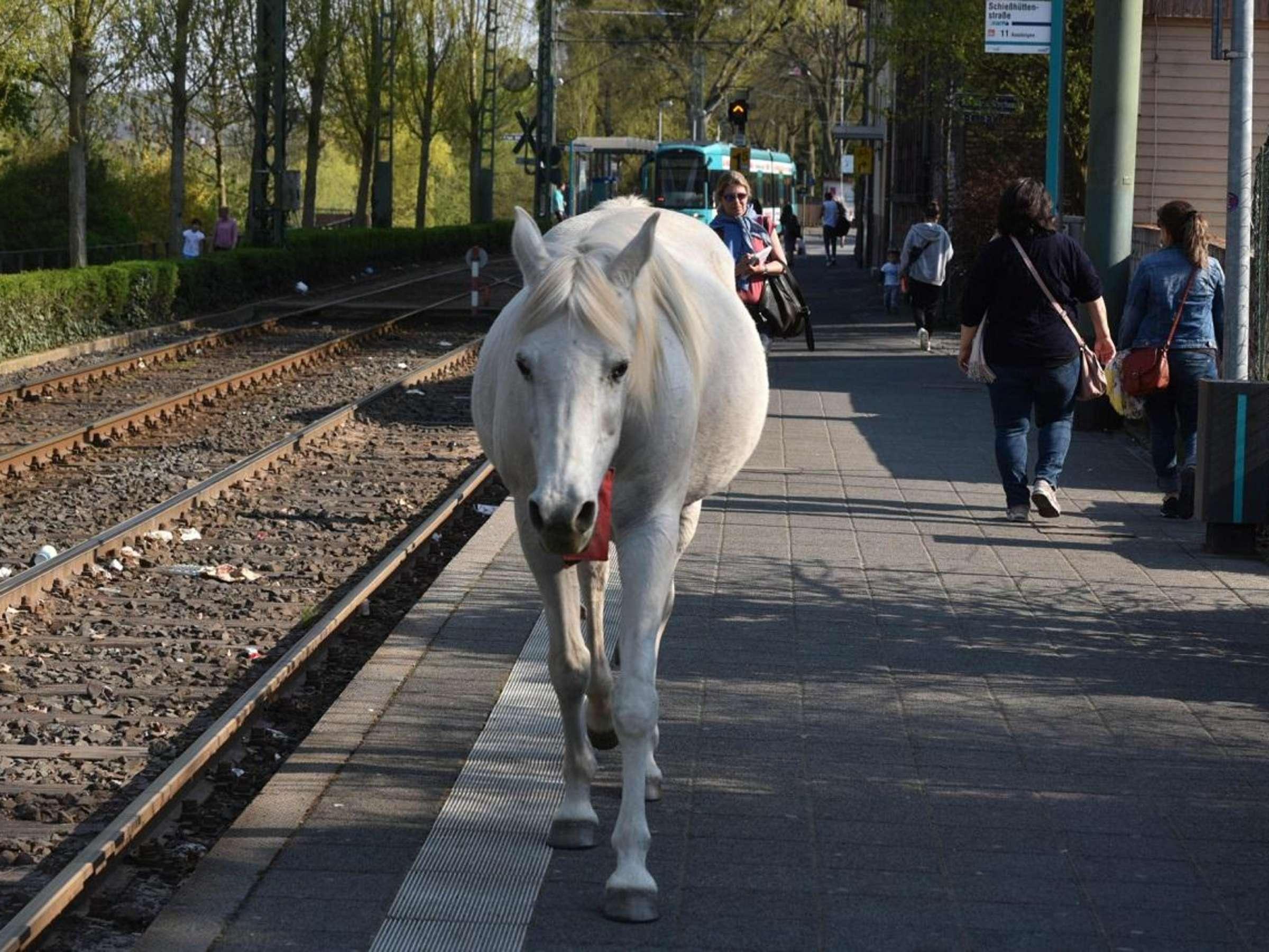 Kommt frau pferd in Können Mädchen