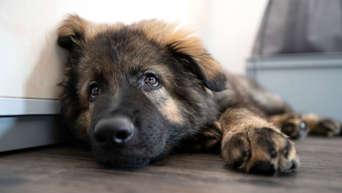 Was Bedeutet Corona Bei Menschen Fur Hund Und Katze Tiere